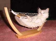 kittenhammock2001.jpg